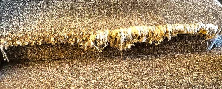 Best Carpet Repair Eltham